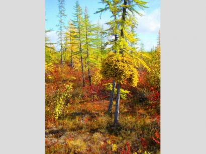 Осенние краски_1