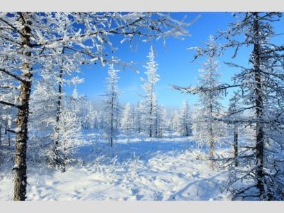 Зимняя сказка_1