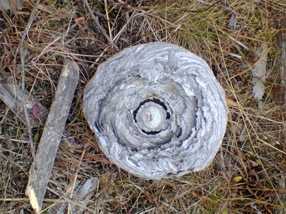 Осиное гнездо_1