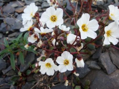 Северные цветы_1