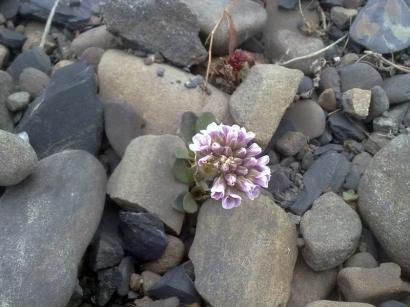 И на камнях растут цветы_1