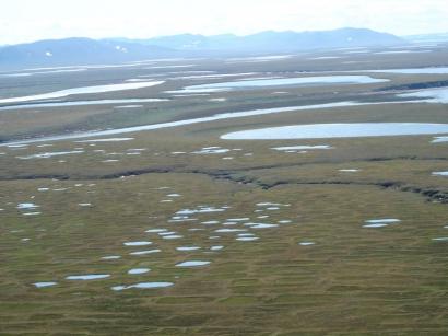 Левый берег Булкурской протоки