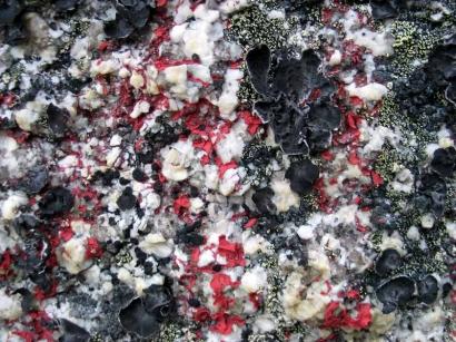 Лишайники на камне