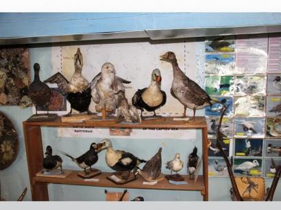 Орнитологическая коллекция музея