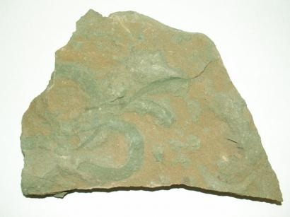 Следы ползания моллюсков Mattaia