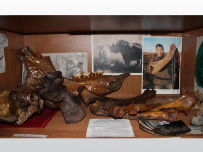 """Коллекция """"Шерстистый носорог"""""""
