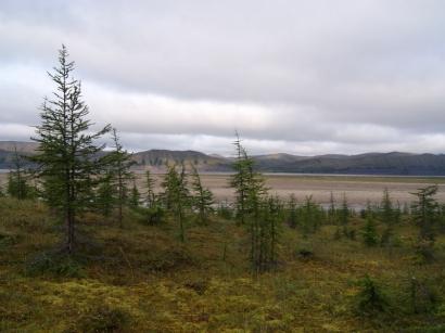 Остров. Знаменитый лесной массив – один из самых северных в мире