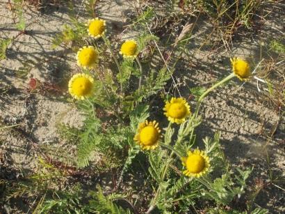 Солнечный цвет_1