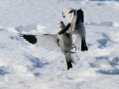 Воздушная схватка_1