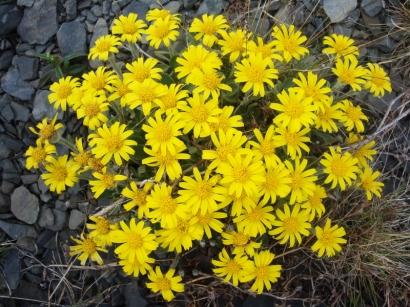 Северные цветы_2
