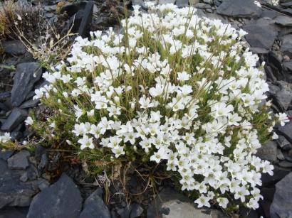 Северные цветы_3