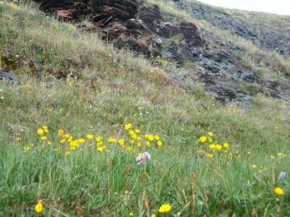 Северные цветы_4