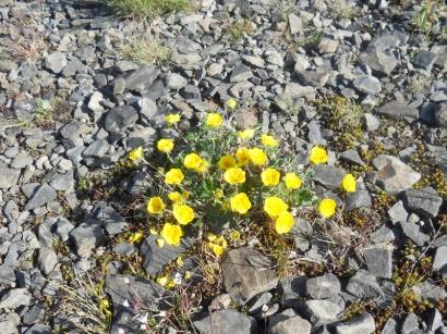 Северные цветы_5