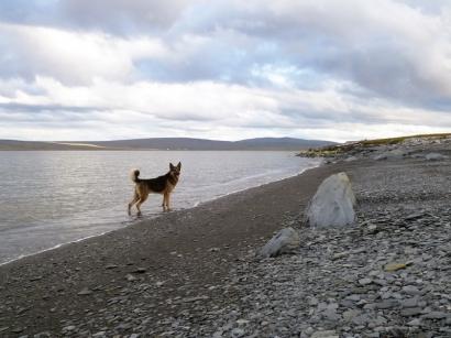 Пес на берегу_1