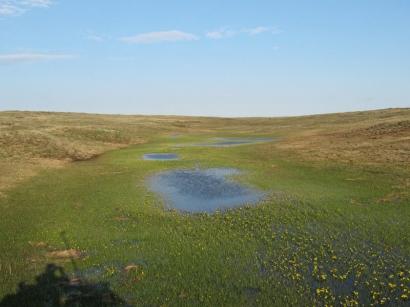 Днище долины ручья. Цветет калужница