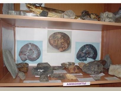 Коллекция аммонитов