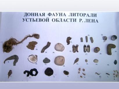 Донная фауна литорали устьевой области реки Лена